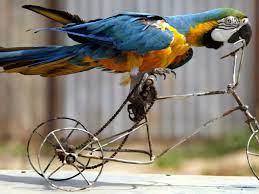 Birds Are Us